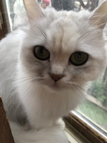 窓辺に座ってこちらを見つめる猫