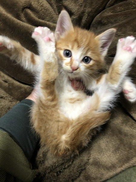 足がピーンとなっている子猫