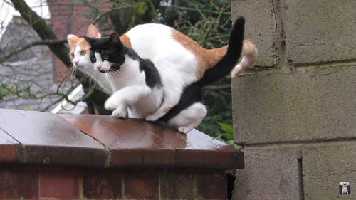 困惑する猫たち