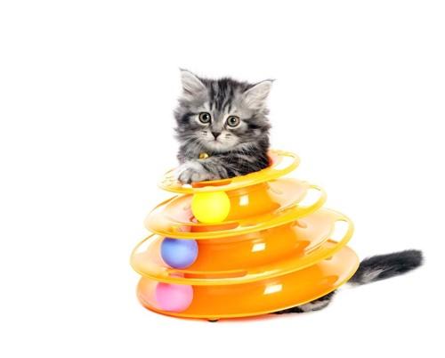 おもちゃに入って遊ぶ子猫