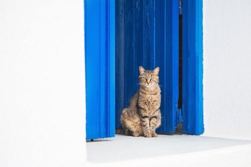 青い扉の前で座ってお見送りをする猫