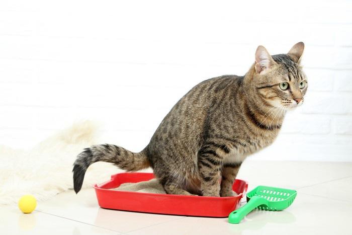 小さなトイレに入る猫