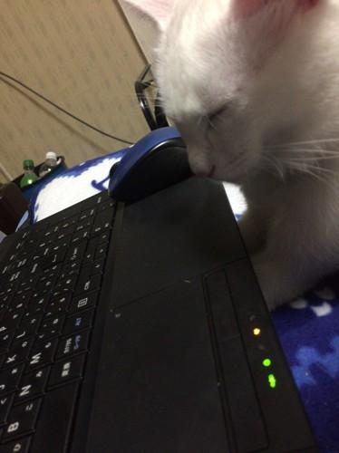 パソコンでぬくぬくする猫