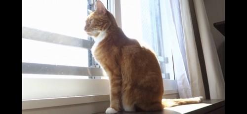 窓際に来たちゃいちゃん