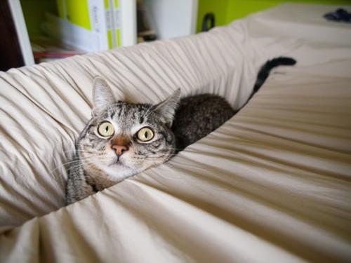 はまり込む猫