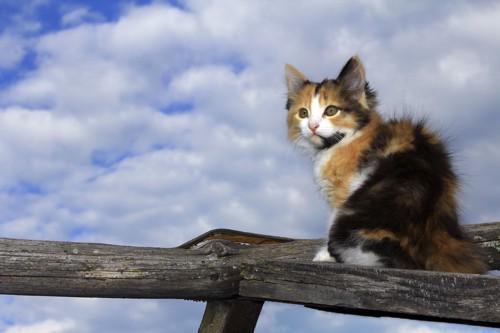 手すりで振り返る猫