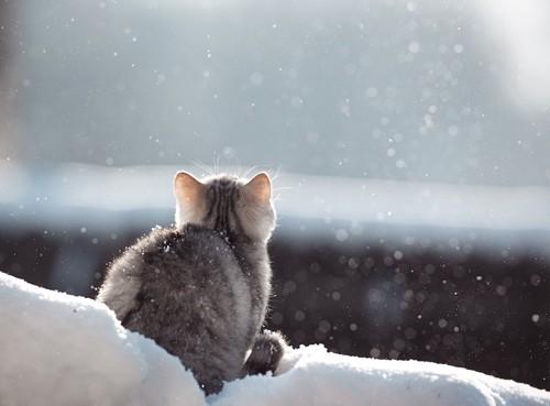 雪の中で上を見る猫の後ろ姿