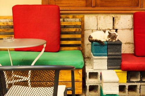 カフェのブロックで丸くなる猫