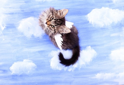 天使の羽をつけた猫