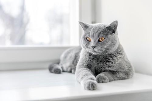 窓辺でくつろぐ猫
