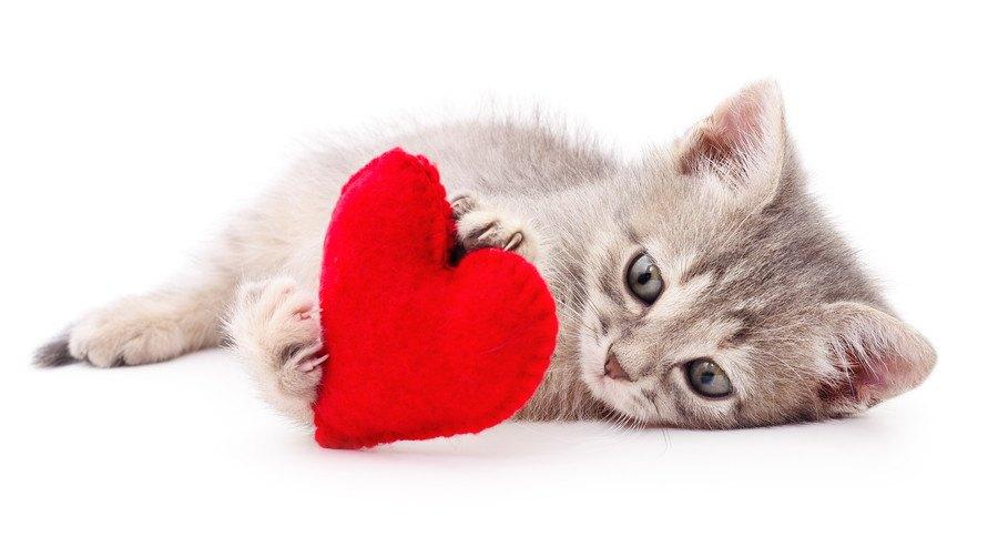 ハートを抱く子猫
