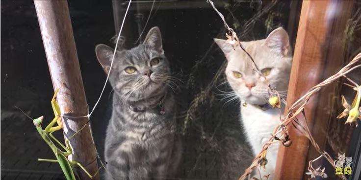 外にいるカマキリと見つめる猫たち