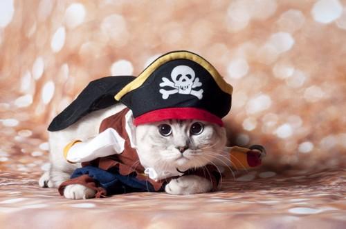 海賊のコスプレの猫