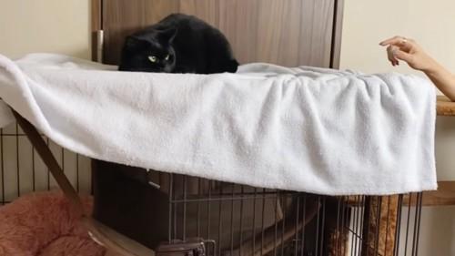 ケージの上にいる猫