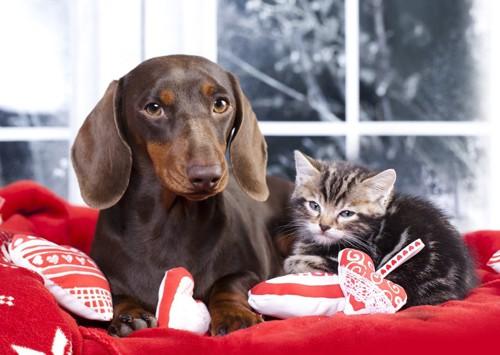 バレンタインのチョコレート犬と猫