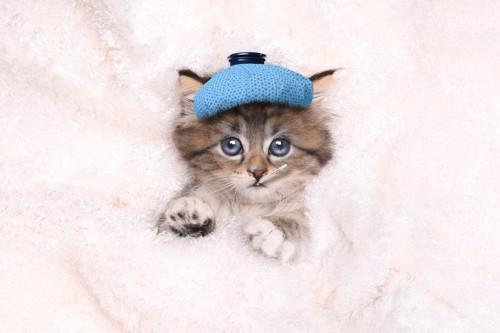 熱さましのシートを貼る猫