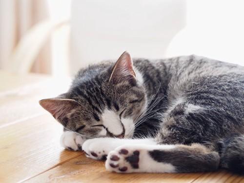 子猫の昼寝
