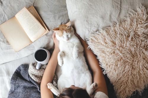 飼い主のいるベットの上で仰向けで甘える猫