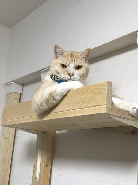 おもしろいポーズの猫