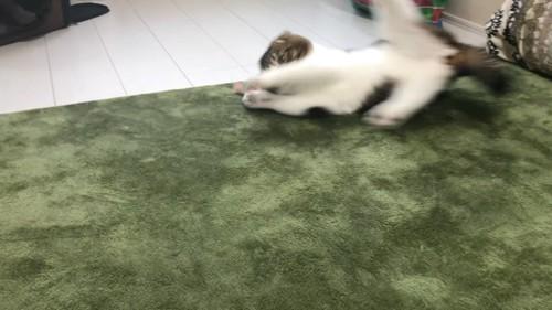 滑り込む猫