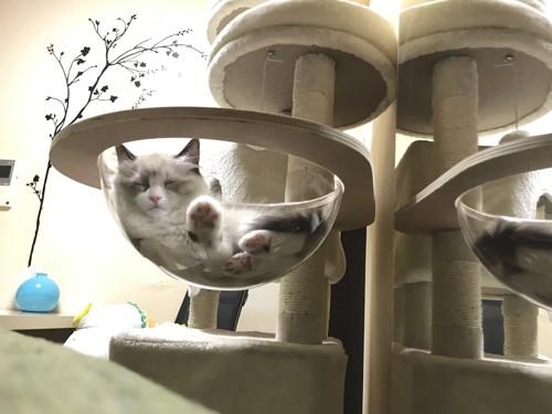 カプセルで寝る猫