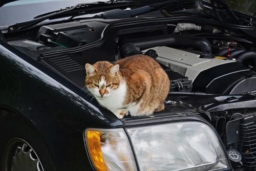 エンジンルームの中に猫