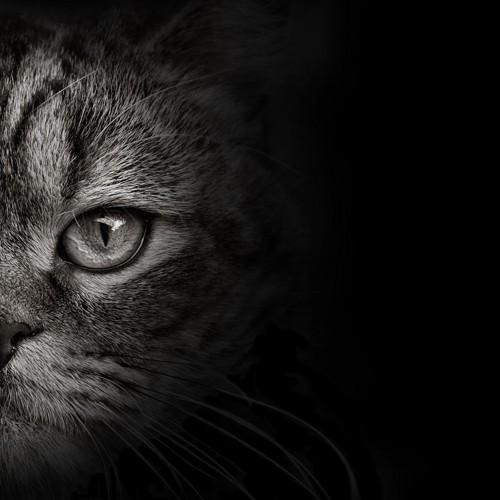 顔半分の猫 モノクロ