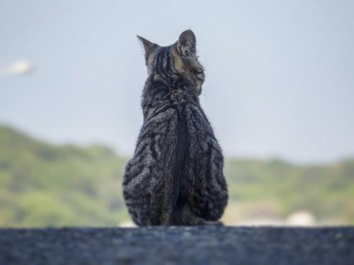 座っている猫の後ろ姿