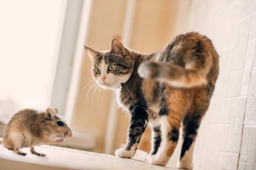 振り返ってネズミを見る猫