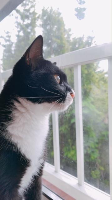 窓の外を見るオレオ