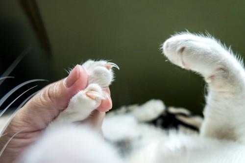 爪を切る前の猫の爪出し