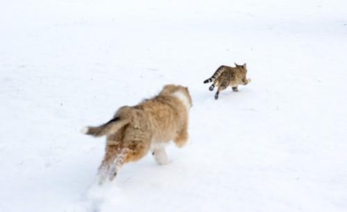 走る2匹の猫の後ろ姿