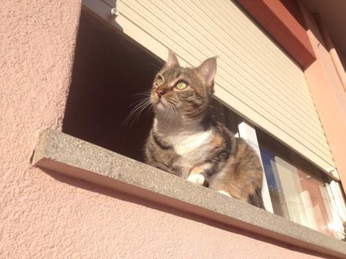 窓から向こうを見る猫
