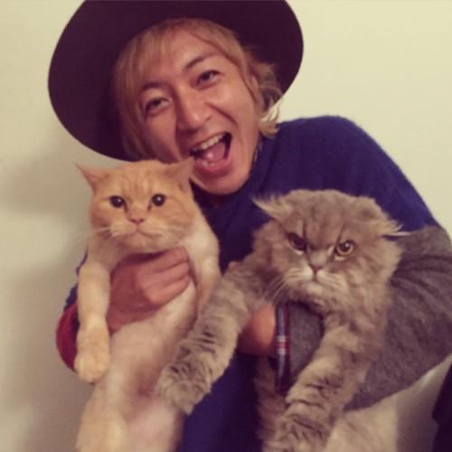つるの剛士の猫、チャコとユメコ