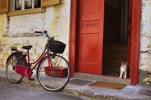 玄関で飼い主を待つ猫
