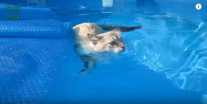 プールで猫かき