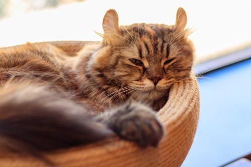 薄目を開けて寝ている猫