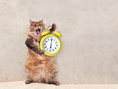 目覚まし時計を持つ猫