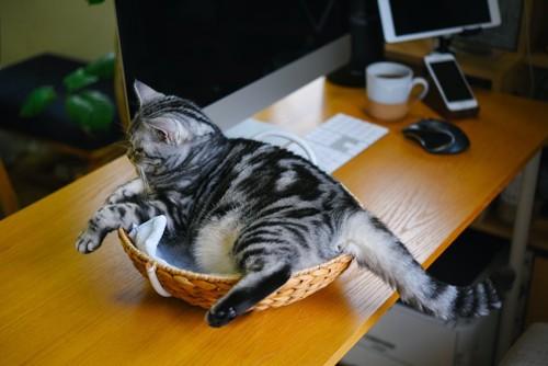 デスクに置かれたカゴに入っている猫