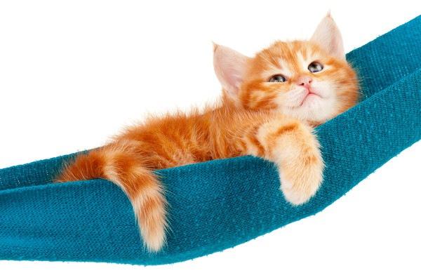 ハンモック上の子猫