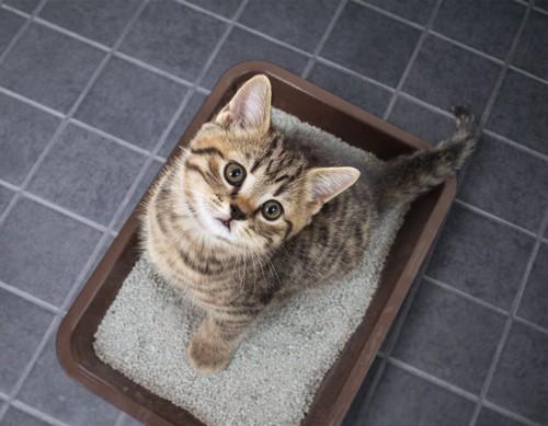 トイレで見上げる子猫