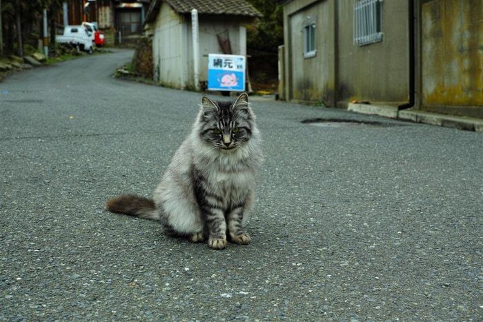 田代島の猫の写真