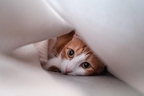 布団の隙間に入り込んで寛ぐ猫