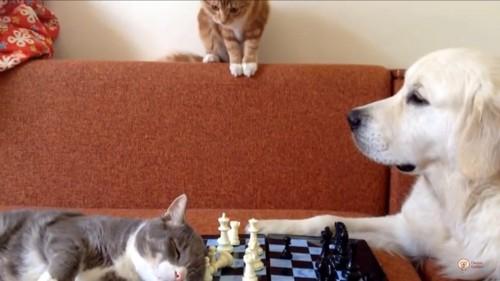 別の猫登場