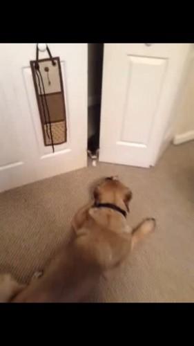 扉の前に犬