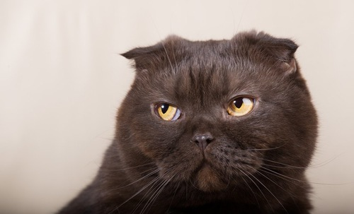 横を見る黒い猫