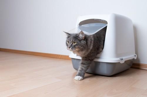猫用トイレから出てくる猫
