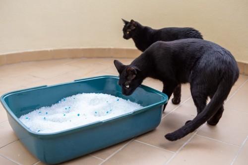 トイレを遠巻きにする猫達