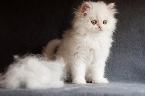 白い猫と抜け毛