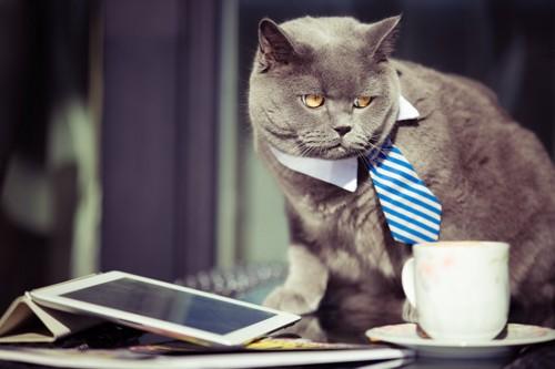ネクタイをしている猫